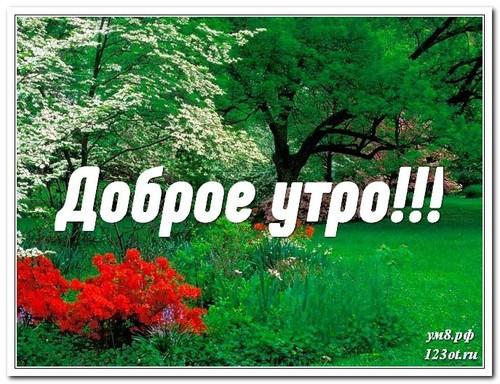 Доброго утра и хорошего дня, открытка мужчине, мужу, с природой