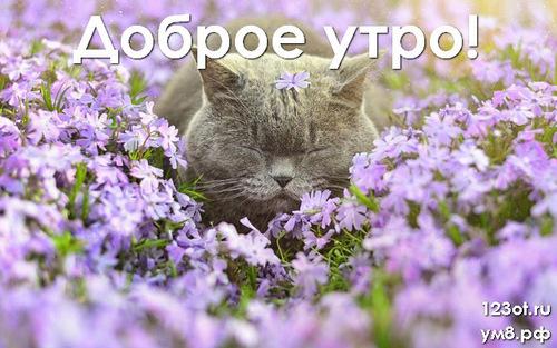 Доброе утро и отличного дня, картинка с цветочками (цветы) девушке, женщине