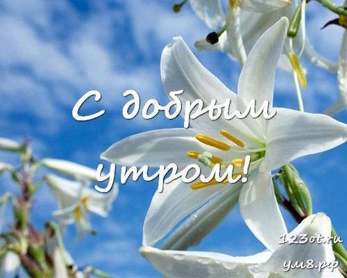 Доброе утро и отличного дня, открытка с цветами для девушки, женщины