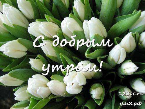 Доброе утро и отличного дня, открытка с красивыми цветами женщине, жене