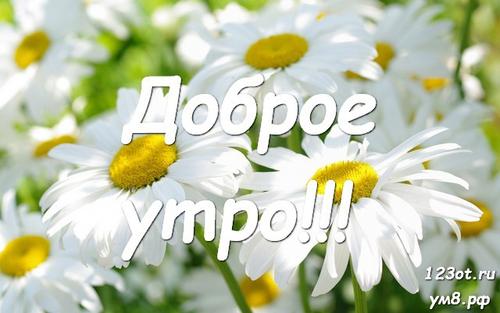 Доброе утро и отличного дня, открытка с природой, с цветами девушке, женщине