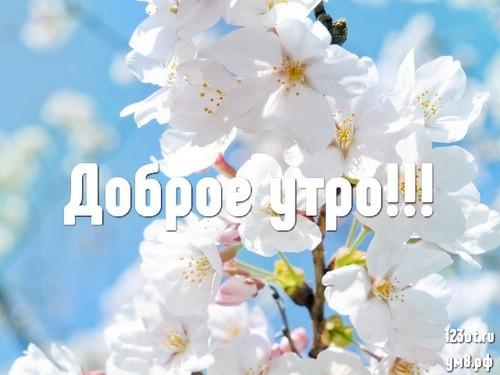 Доброе утро и отличного дня, открытка с природой, с цветами женщине, жене