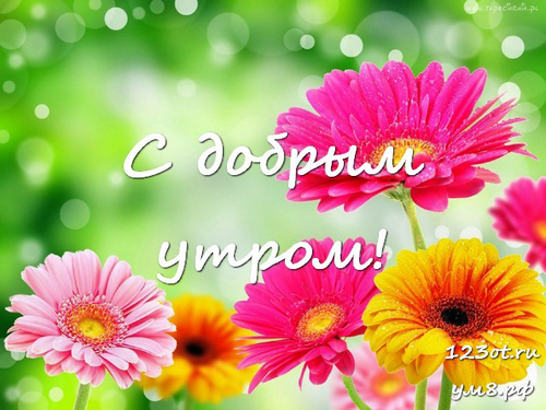 Доброе утро и отличного дня, открытка с природой, с цветами для девушки, женщины
