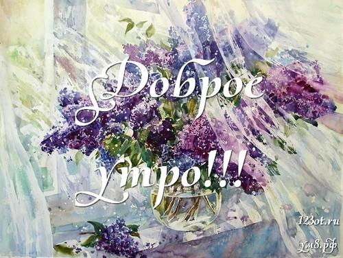 Доброго утра и хорошего дня, картинка с природой, с цветами для девушки, женщины