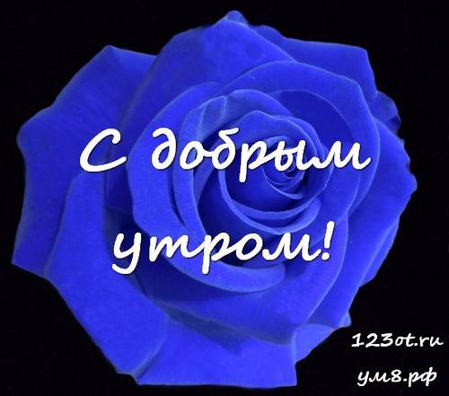 Доброго утра и хорошего дня, открытка с цветами для девушки, женщины