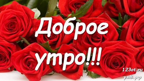 Доброго утра и хорошего дня, открытка с цветами для женщины, для жены