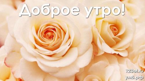 Доброго утречка, открытка с цветочками (цветы) девушке, женщине