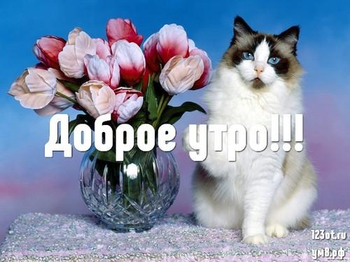 Доброго утречка, открытка с красивыми цветами девушке, женщине