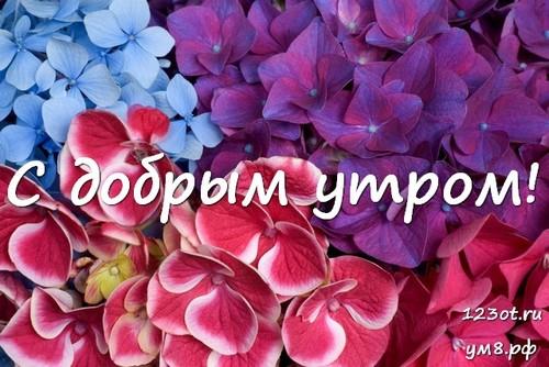 Прекрасного утра, картинка с цветами девушке, женщине